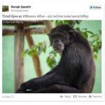 Awesome Tweet Embedr for WordPress